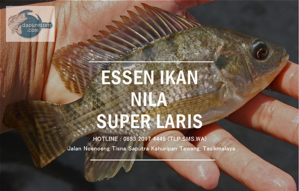Essen Ikan Nila Super Laris