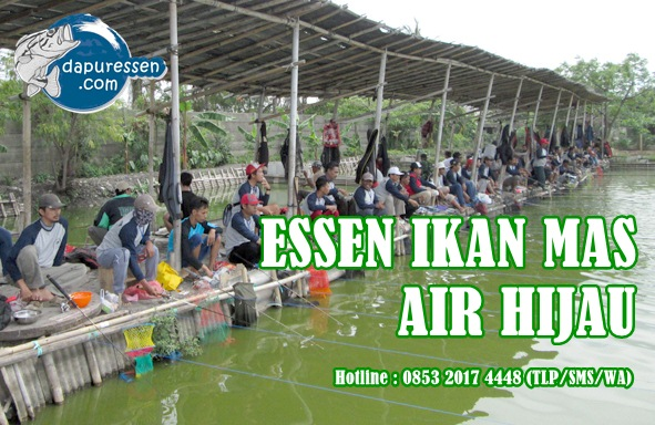 Essen Ikan Mas Air Hijau